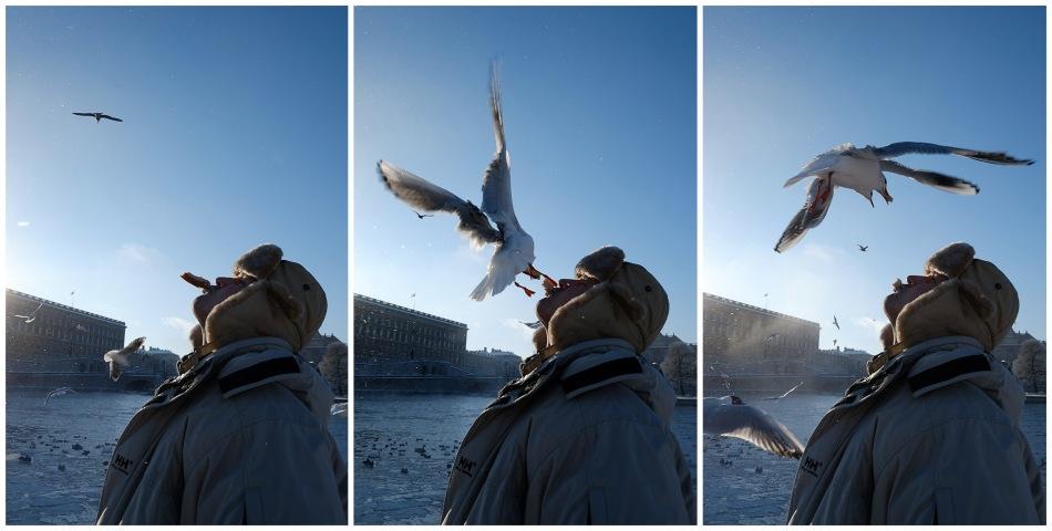 Sthlm, 2013: Bird feeding, mouth-to-mouth