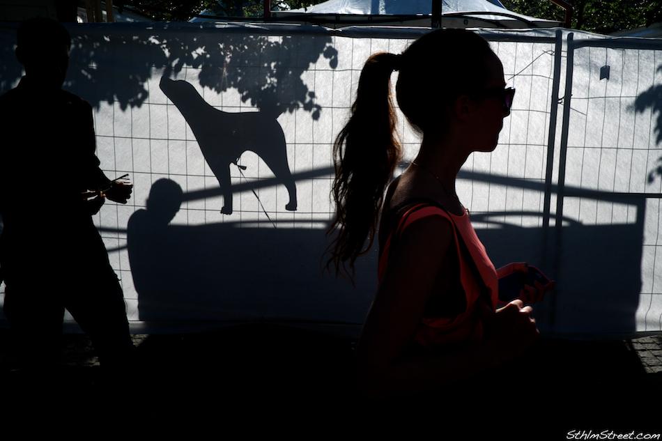 Sthlm, 2013: Rising dog