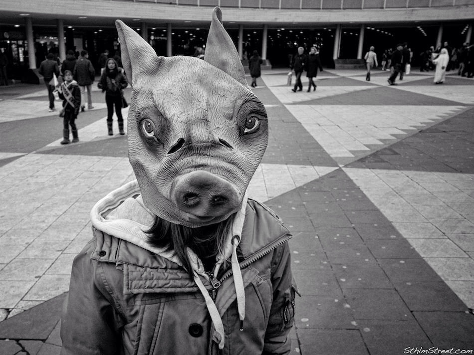 Sthlm, 2013: Pigfaced